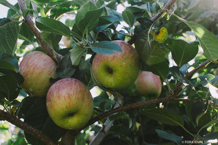 Apple Picking | Fork Knife Swoon