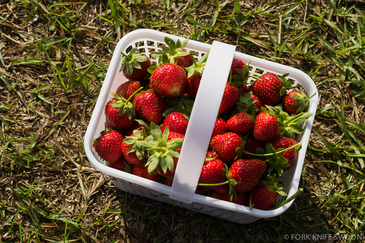 Gillis Hill Strawberry Picking | Fork Knife Swoon