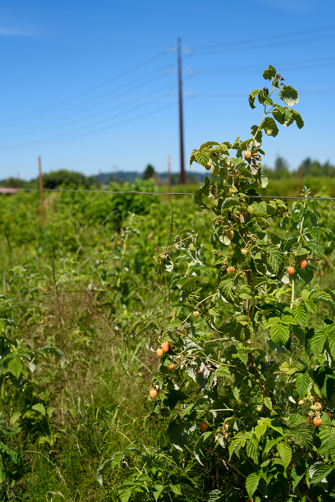 A visit to Wild Hare Organic Farm in Puyallup, WA | via forkknifeswoon.com