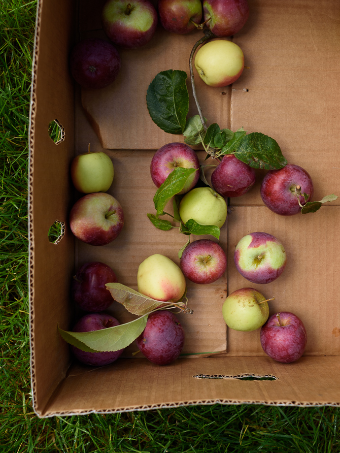 box of fresh picked apples via forkknifeswoon.com