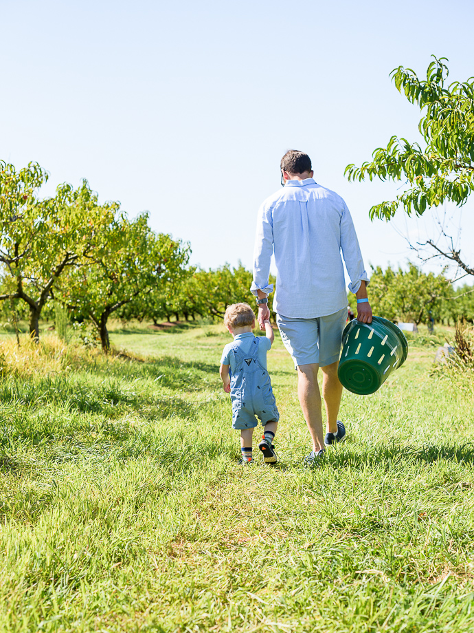 dad and toddler walking through a peach orchard via forkknifeswoon.com
