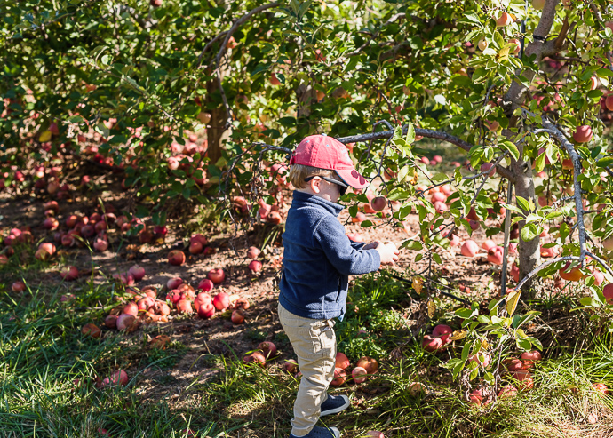toddler picking apples