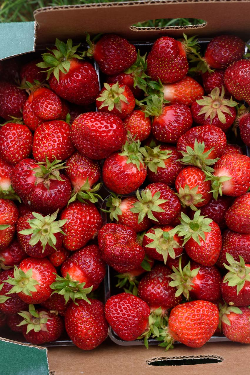 a close up of fresh strawberries from the farmers market from forkknifeswoon.com